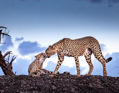 Intimate View of the Masai Mara