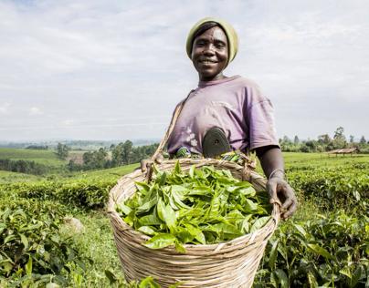 A day with the tea farmer