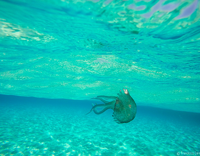 Sicily Snorkeling