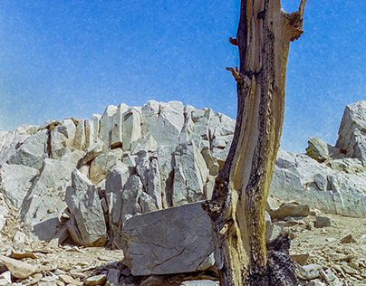 Old Film Scans from the Ancient Bristlecone Pine Forest