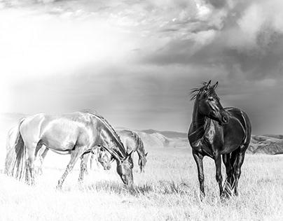 That one - the dark horse
