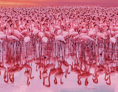 Big Flamingo Project