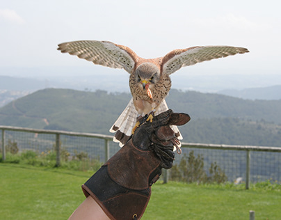 Have you ever handled an exotic raptor?