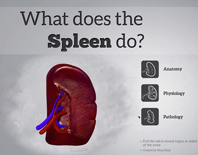 What does the Spleen do? (ebook)