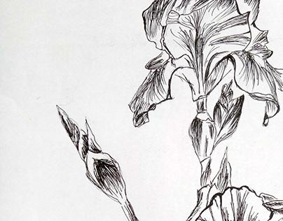 Pen Sketch.