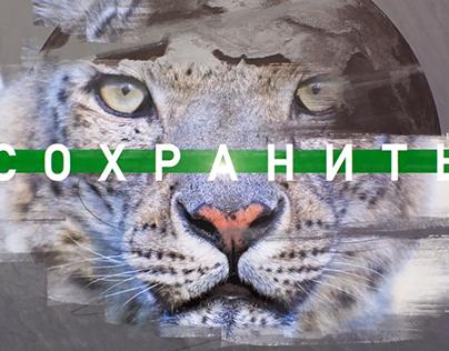 Saving snow leopard