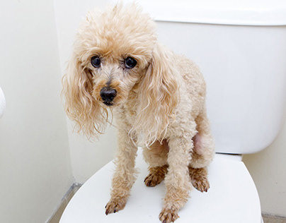 Chó bị tiêu chảy