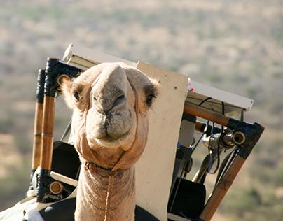 The Camel Fridge Project