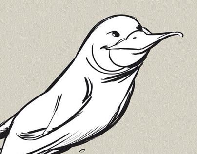 More platypus sketches.