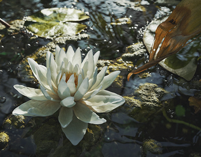 Lost in blossom [FULL CGI]