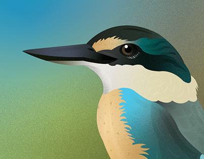 New Zealand Birds | Lockdown Illustrations