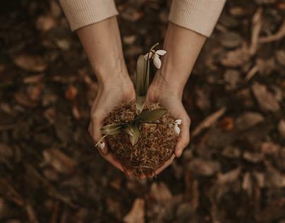 What are Growth Regulators in Plants - PLantgrowpick.