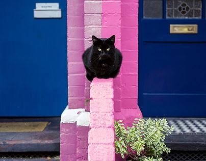 Street Cats