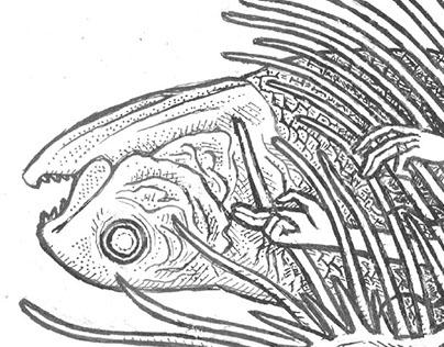 Harp & Coelacanth