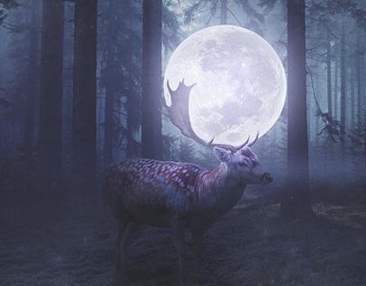 Deer Of 🌕