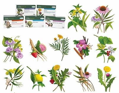Illustrations pour une série de tisanes