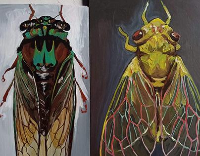 """Cicada Series"" 2021"