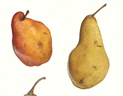 Frutta mista
