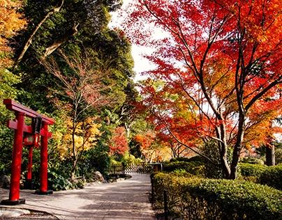 Tokyo/Kyushu Visuals