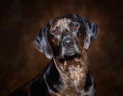Pet Portraits - by Amy Schromm