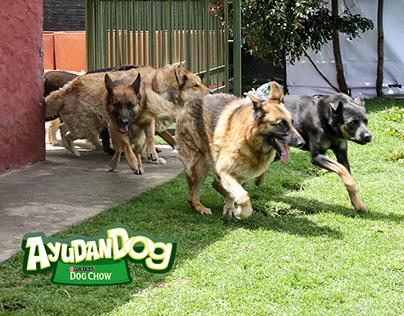 Copy AyudanDOG PURINA® DOG CHOW® Colombia.
