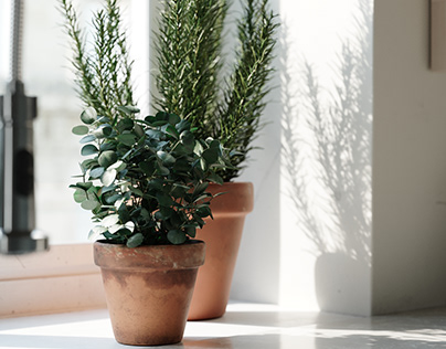 Indoor Plant Models
