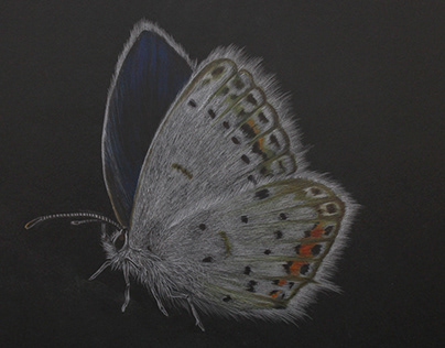 the Butterfly effect Illustrations