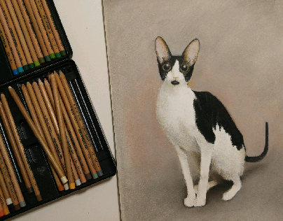 Star, Cornish rex