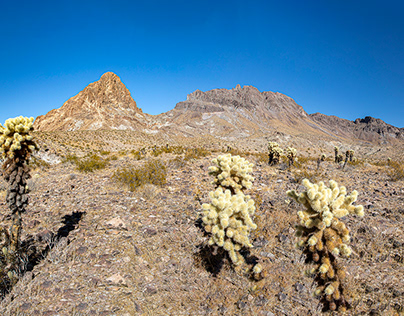 On to the Sonoran Desert
