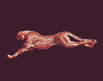 Animal Study: Cheetah