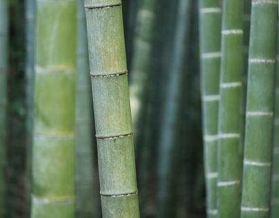 Bamboo Workshop Nagaland
