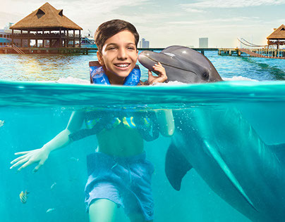 Dolphin Discovery / Global Marketing Campain