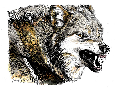 Animal Illustrations, ink and watercolor