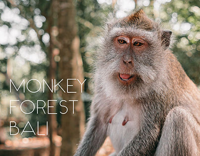 Monkey Forest || October 2019