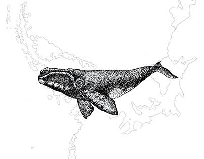 Antártida: fauna bajo cero
