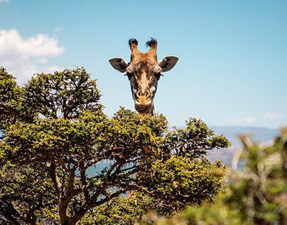 Photography: Safari