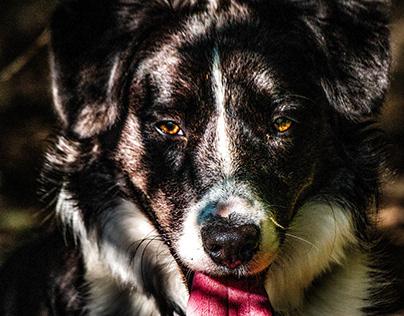 Oz, notre chien.