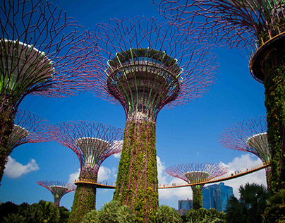 'Gardens by The Bay' - Singapore