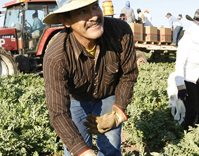 Foreign Migrant Agricultural Workers in US