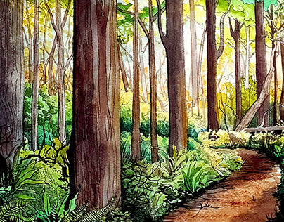 Forest Series
