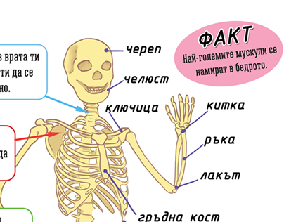 Kids educational book - Human body
