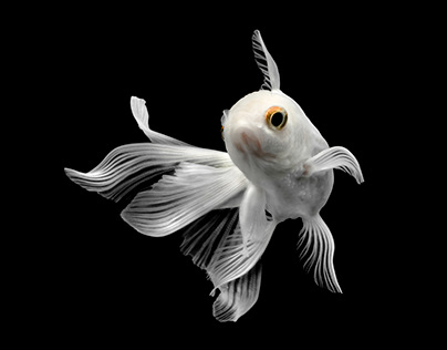 GOLDFiSH white