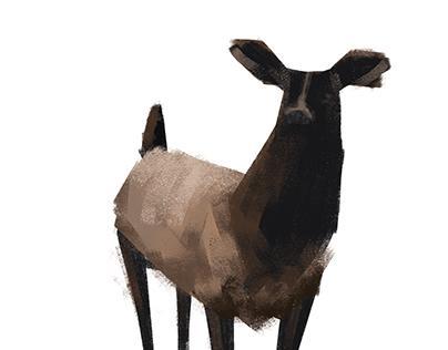 Animals, Painted
