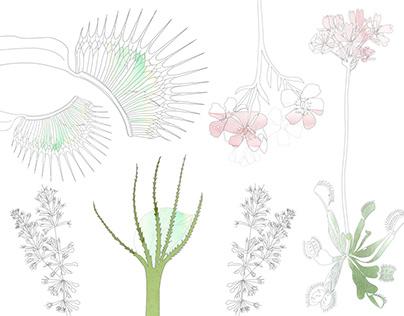 Carnivore - Carnivorous Plants World