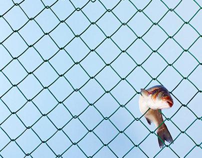 Il pescatore di uomini