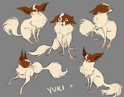 Yuki the Papillon Mix