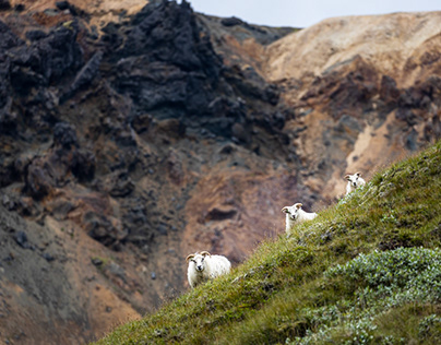 Roaming the southern Icelandic Highlands