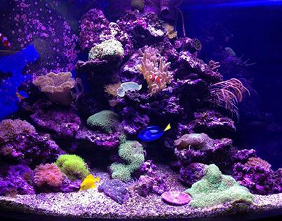 Дуговой рифовый аквариум