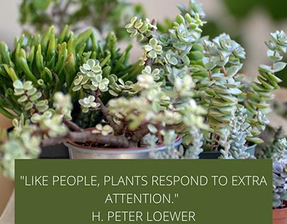 Benefits of Plants & Gardening Quotes Michelle Beltran