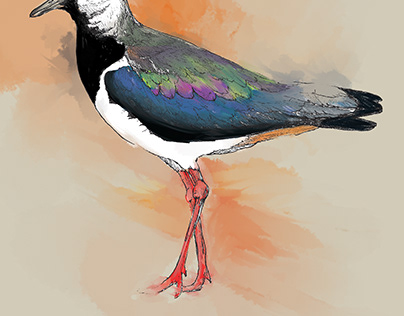 Take action for the Northern Lapwings